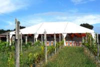 Omata-Estate-Vineyard wedding.jpg