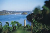 Omata-Estate-Vineyard vine-view.jpg