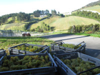 Paroa Bay Winery Sauvignon-Blanc-2013-640.jpg