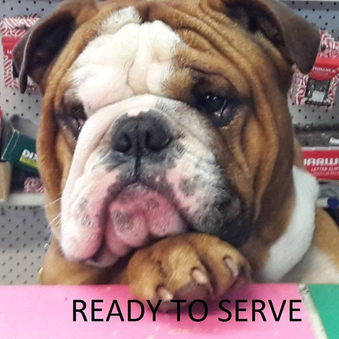 dude ready to serve customers.jpg
