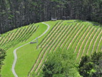 Paroa Bay Winery Vineyard-Views-640.jpg